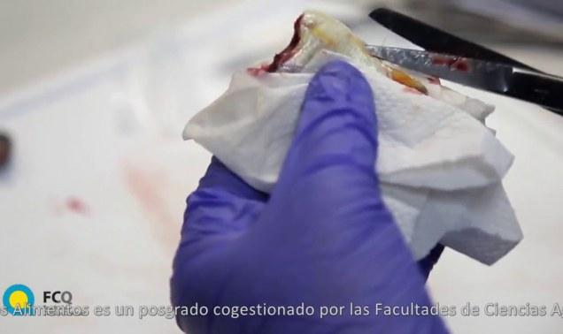 Embedded thumbnail for MAESTRÍA EN CIENCIA Y TECNOLOGÍA DE LOS ALIMENTOS